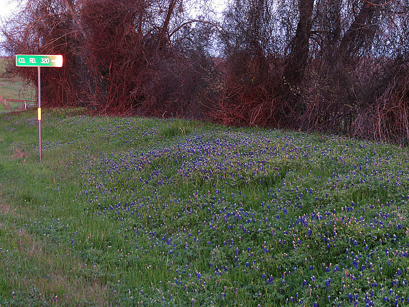 2014 03 20 TX Places Bluebonnets and sun glare on CR320 sign along CR2