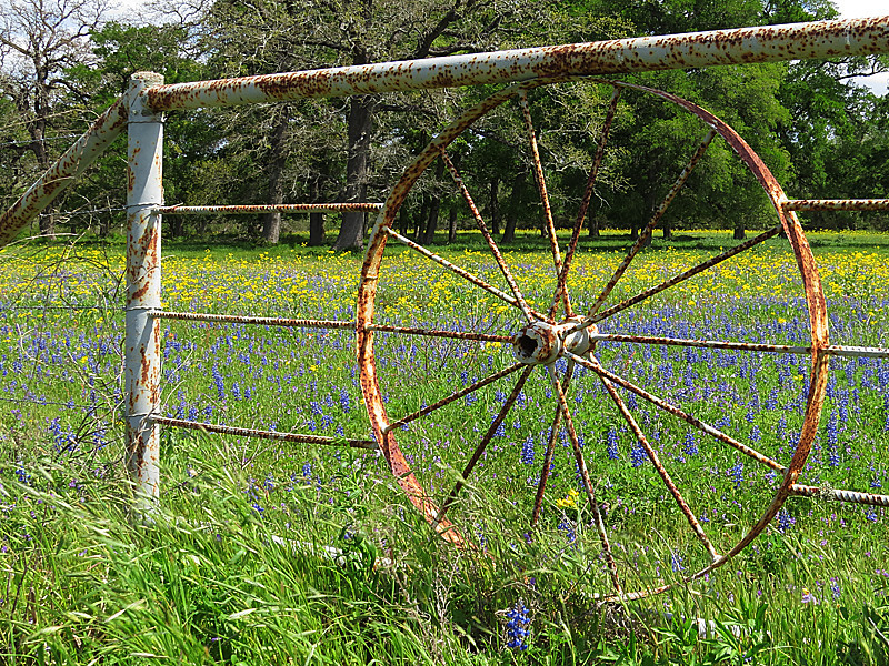 2014 03 31 Flowers Old rusty wheel gate and wildflowers along 389