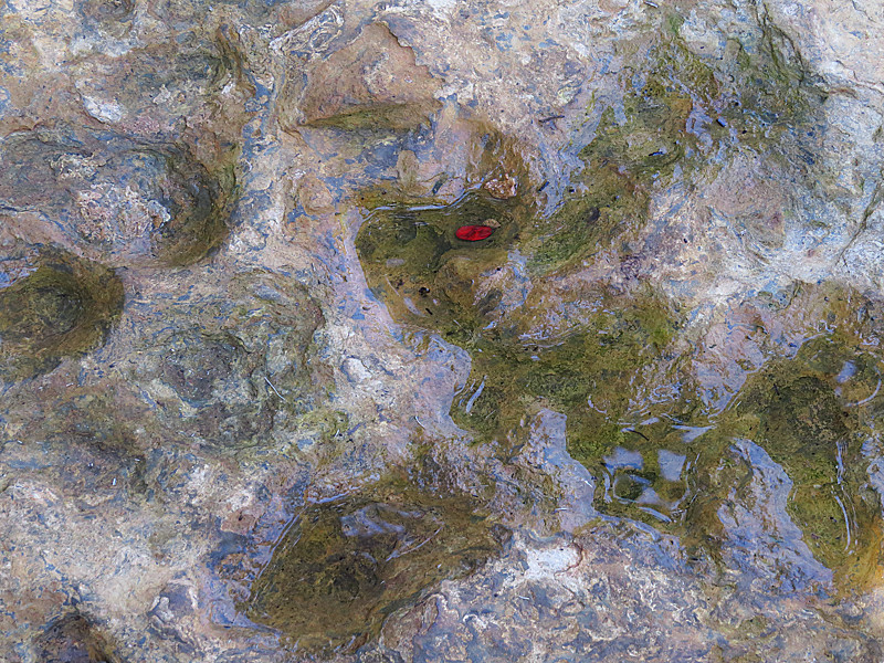 2013 10 Red leaf on wet stone