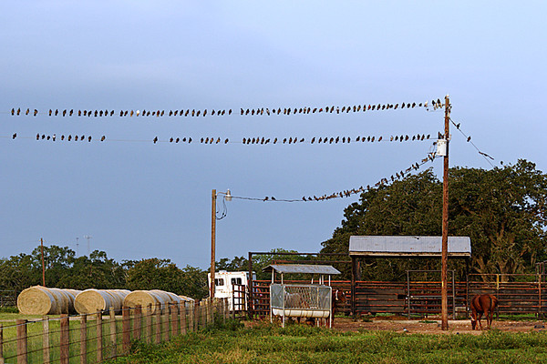 2009 TX FM1488 birds on the lines