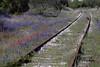 TX 2003 Kingsland wildflowers in the train tracks
