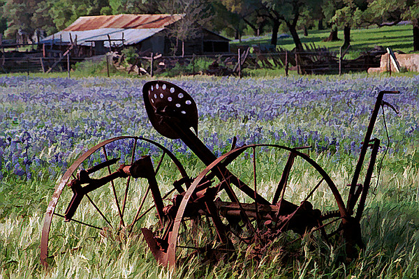 TX 1987 Marble Falls old rake and bluebonnets