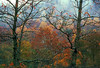 1994 WV Autumn rain trees decorated with rain drops